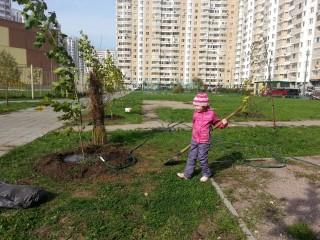 Озеленение двора в граде 27 сентября 2014 г град Московский