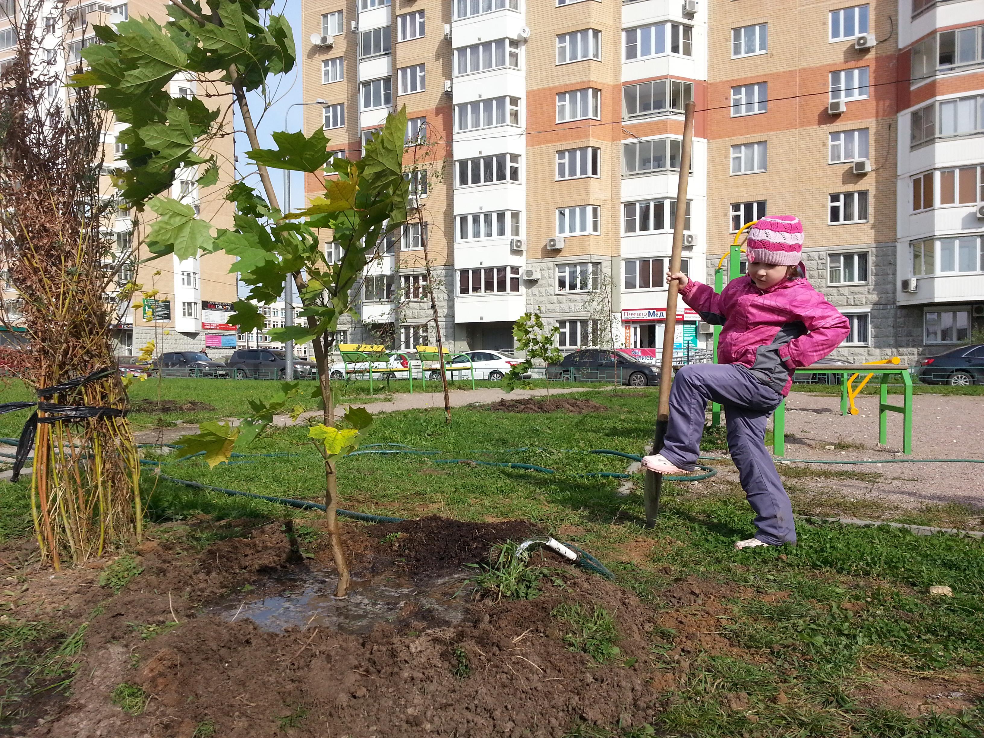 Озеленение двора в граде 27 сентября 2014 г