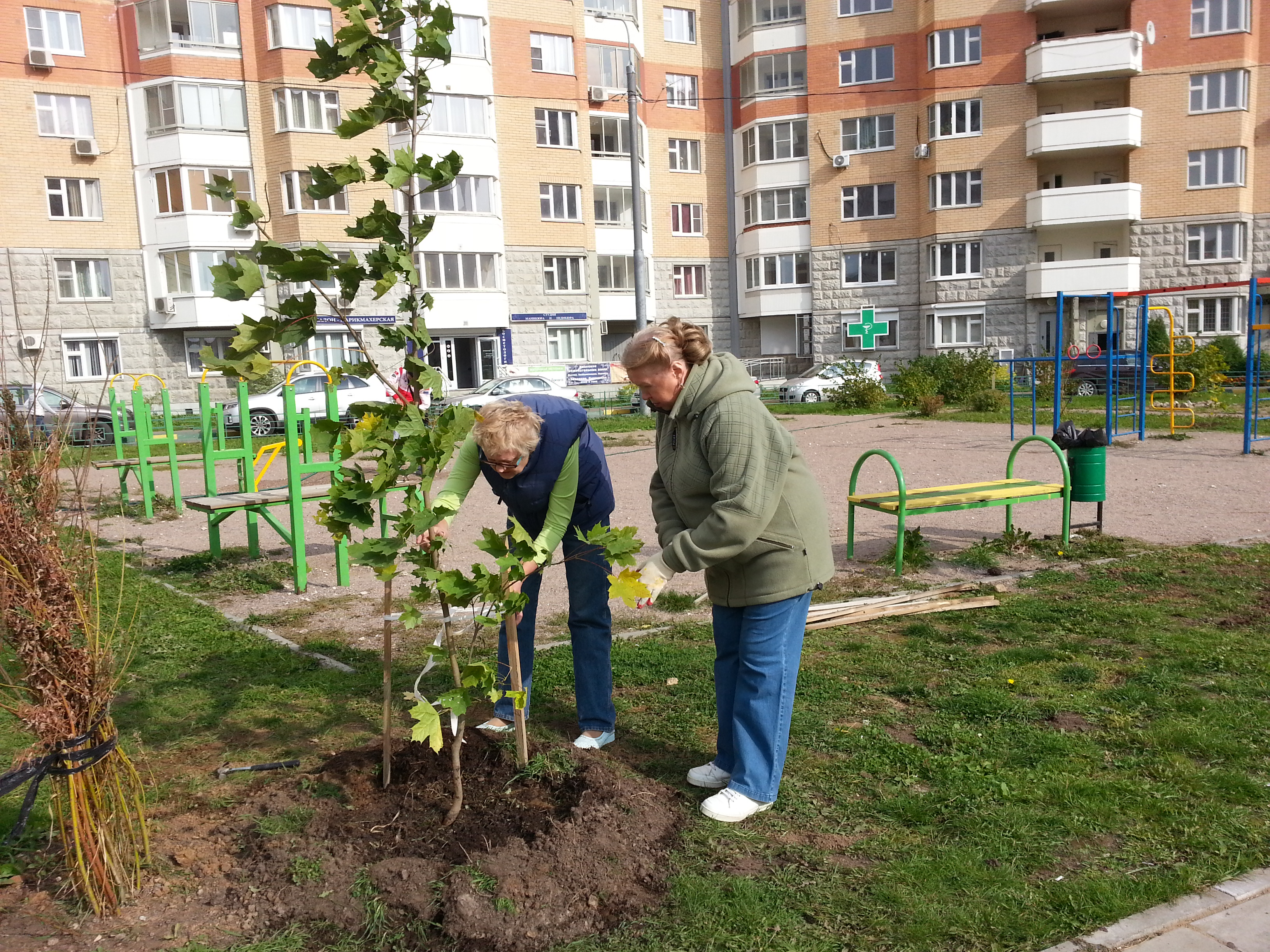 сажаем деревья Озеленение двора в граде 27 сентября 2014 г